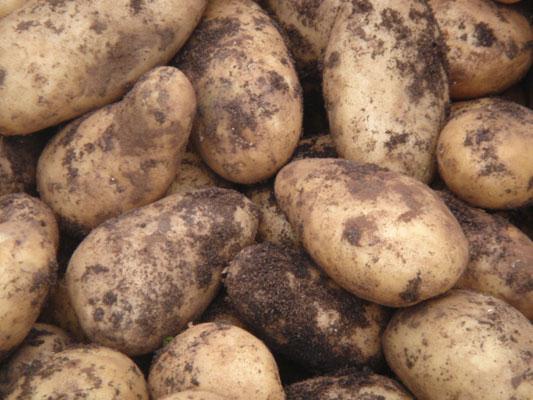 Resultado de imagen de patacas