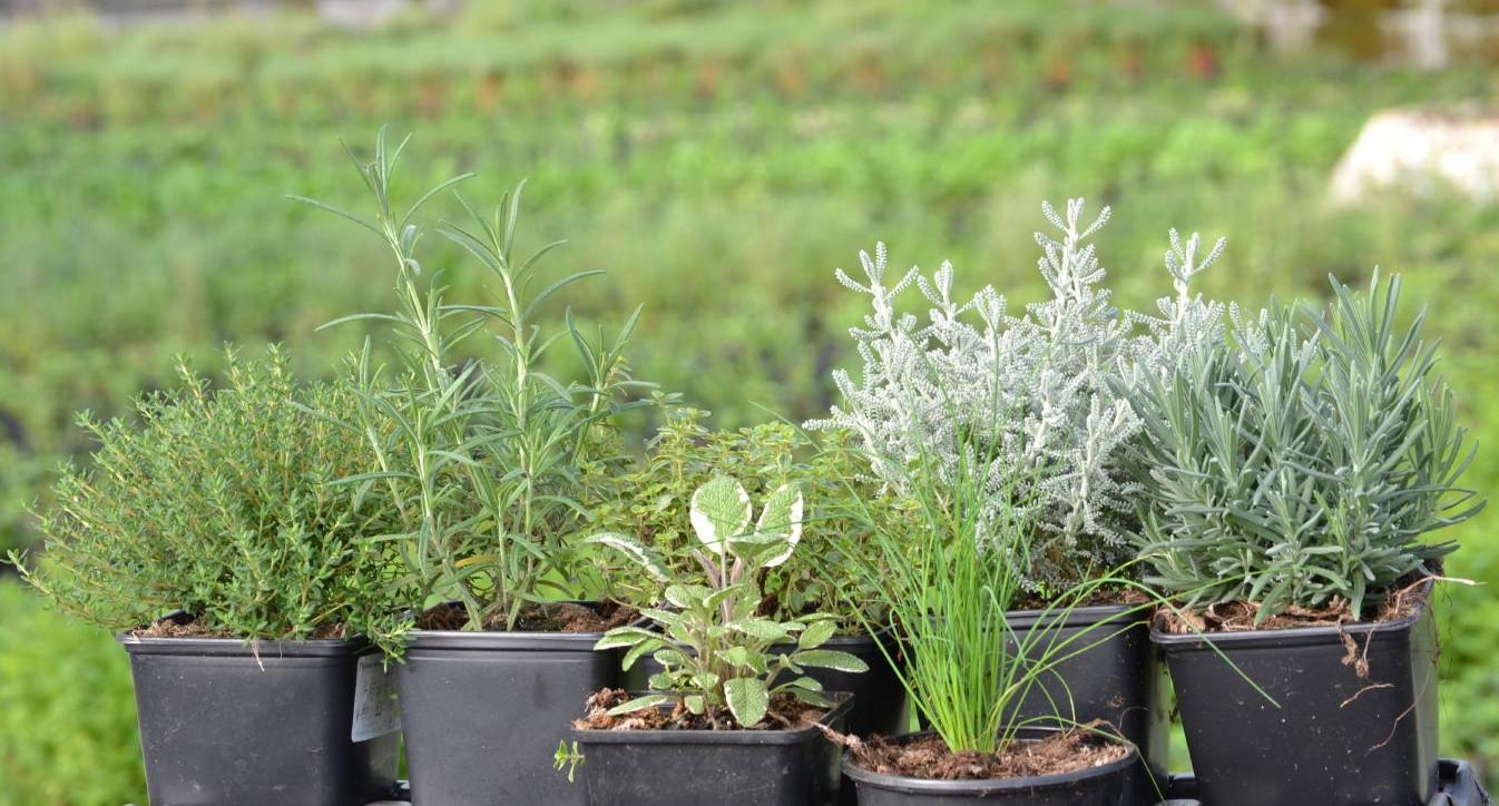 Granxa familiar for Concepto de plantas ornamentales